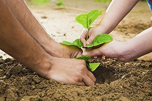 A man and woman's hands planting a tree in the ground.